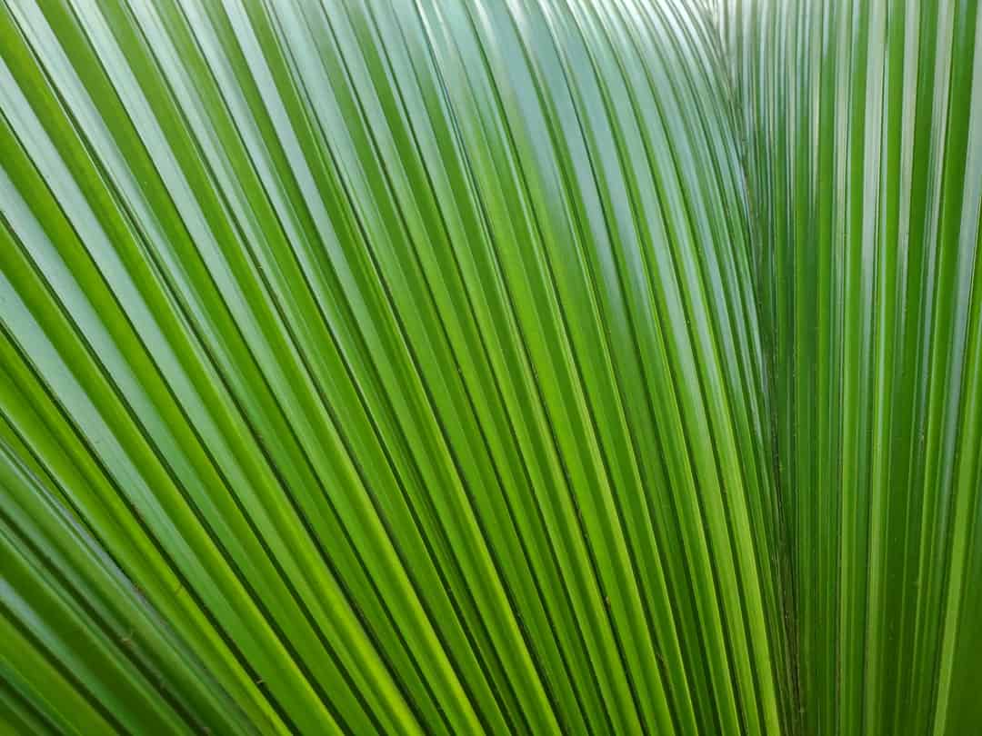 A close up of a plant