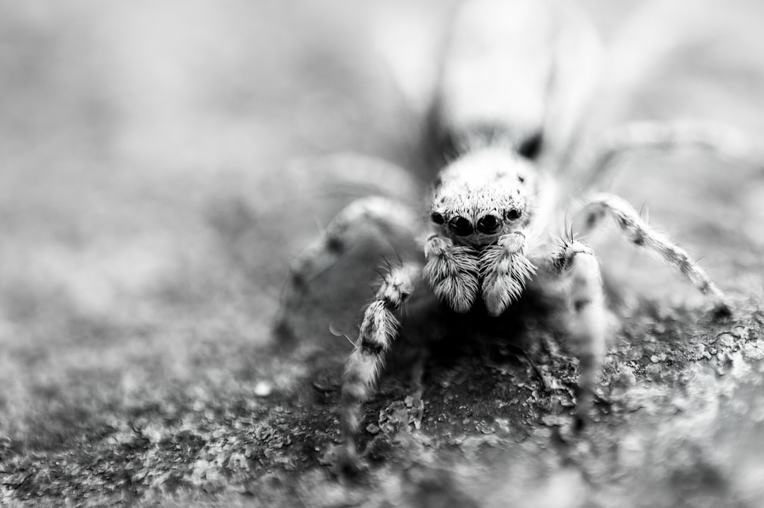 A close up of a spider